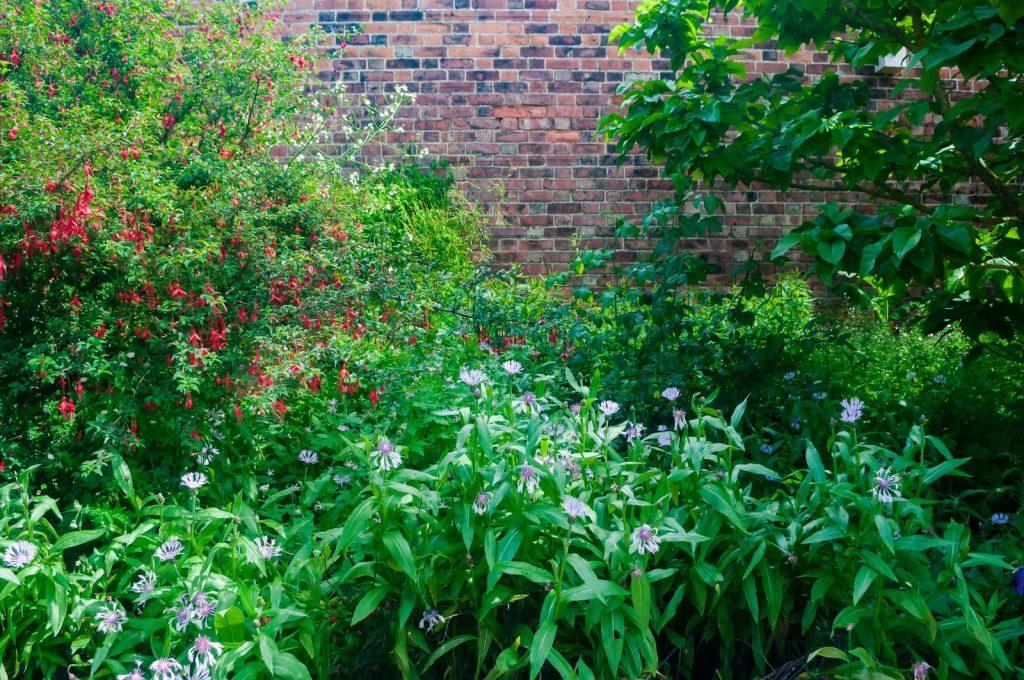虫が多い!庭の虫除け対策