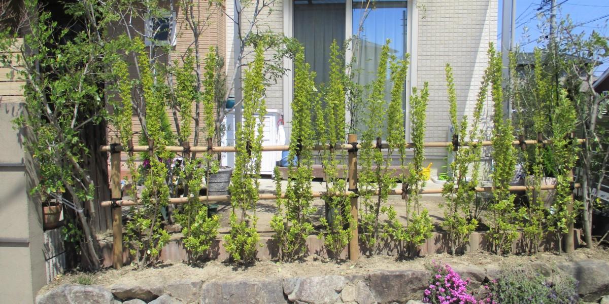 枯れてしまった生垣の植え替え|江南市